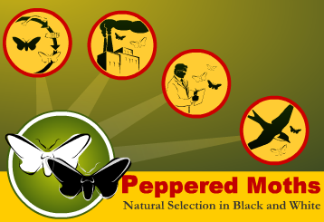 Peppered Moths Online Activity
